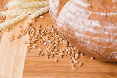 Wheat grains and bread. A closeup of a round loaf of bread, with wheat grains and stalks placed next to it Royalty Free Stock Photo