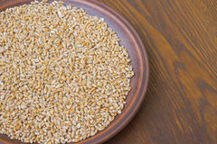 Wheat grains on ceramic plate. top view Royalty Free Stock Image