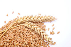 Wheat grains and cereals spike. Wheat isolated on white background. Royalty Free Stock Image