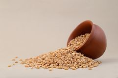 Wheat grains in clay pot. Close up of Wheat grains in clay pot Royalty Free Stock Photo