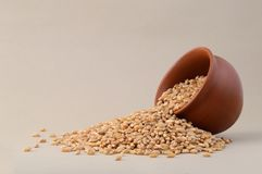Wheat grains in clay pot. Close up of Wheat grains in clay pot Royalty Free Stock Photography