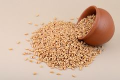 Wheat grains in clay pot. Close up of Wheat grains in clay pot Royalty Free Stock Image
