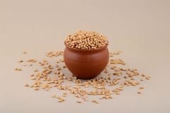 Wheat grains in clay pot. Close up of Wheat grains in clay pot Stock Images
