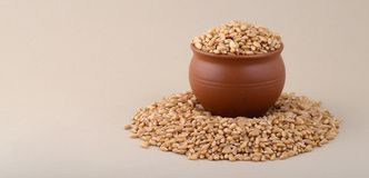 Wheat grains in clay pot. Close up of Wheat grains in clay pot Royalty Free Stock Photos