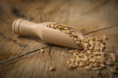 Wheat grains. Close up - in the detail Stock Photography