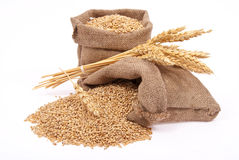 Wheat grains and ears Stock Photos