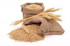 Wheat grains and ears Stock Photos