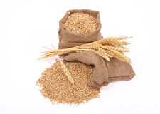 Wheat grains and ears Stock Photography