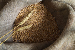 Wheat grains and ears in a sack Royalty Free Stock Photo