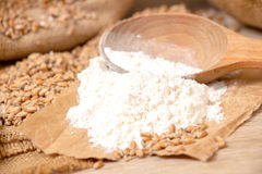 Wheat grains  and flour Stock Photography