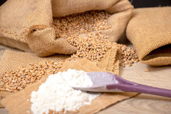 Wheat grains  and flour Stock Image