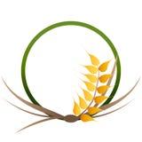 Wheat grains logo Stock Photos