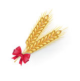 Wheat grains with red ribbon  Stock Image