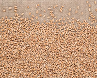 Wheat grains in a sacking Royalty Free Stock Images