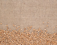 Wheat grains in a sacking. Background Royalty Free Stock Image