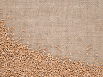 Wheat grains in a sacking. Background Stock Photos