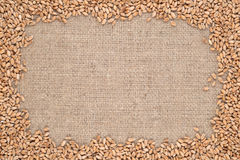 Wheat grains in a sacking background Royalty Free Stock Photography