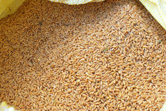 Wheat grains. Royalty Free Stock Images