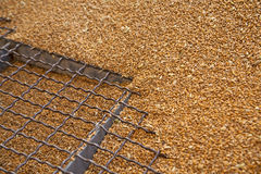 Wheat grains on the silo grid Stock Image
