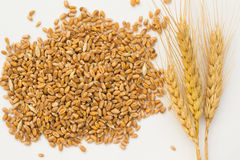 Wheat grains and spikelets wheat on a white background Royalty Free Stock Photos