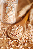 Wheat grains in the spoon Stock Image