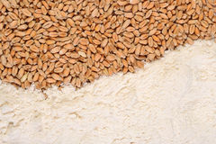 Wheat grains and white flour Stock Image