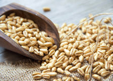 Wheat grains in wooden spoon Royalty Free Stock Images