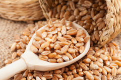 Wheat grains  in wooden spoon Royalty Free Stock Photography