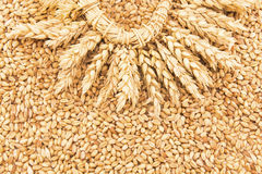 Wheat grains and a wreath of wheat ears Stock Images