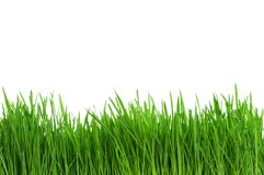 Wheat grass Stock Images