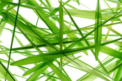 Wheat grass blades  Royalty Free Stock Image