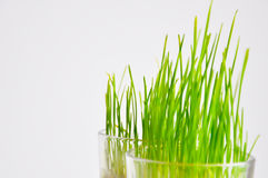 Wheat grass in a bowl Stock Photo