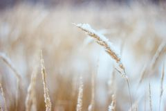 Wheat Grass during Day Royalty Free Stock Photography