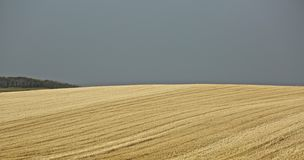 Wheat grass fields Idaho Royalty Free Stock Photo