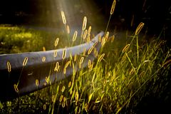 Wheat grass on guard rail on old country road in sunlight. With sun rays and glowing details stock image