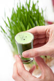 Wheat grass juice Stock Photography