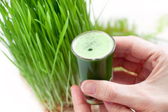 Wheat grass juice Royalty Free Stock Photo