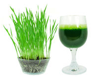 Wheat grass juice Royalty Free Stock Photos