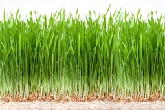 Wheat grass juice Royalty Free Stock Photography