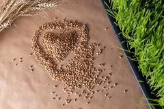 Wheat grass seeds. Love Wheat grass seeds concept. Healthcare concept stock photo