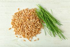 Wheat grass seeds and sprouts. On wooden table stock images