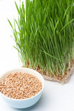 Wheat grass and wheat in bowl composition Royalty Free Stock Images