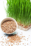 Wheat grass and wheat. In bowl composition on white table Stock Photography