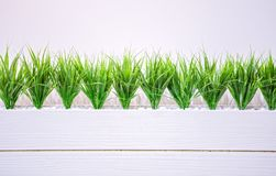 Wheat grass in white wooden pot on the white background in office Stock Photos