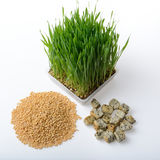 Wheat grass,whole wheat bread and wheat grains Stock Photo