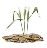Wheat growing from coins Royalty Free Stock Images