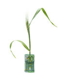 Wheat growing from folded euro Royalty Free Stock Photo