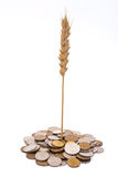 Wheat growing from pile of coins Stock Photo
