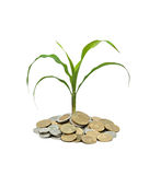 Wheat growing from pile of coins Royalty Free Stock Images