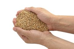 Wheat and hands Royalty Free Stock Photos